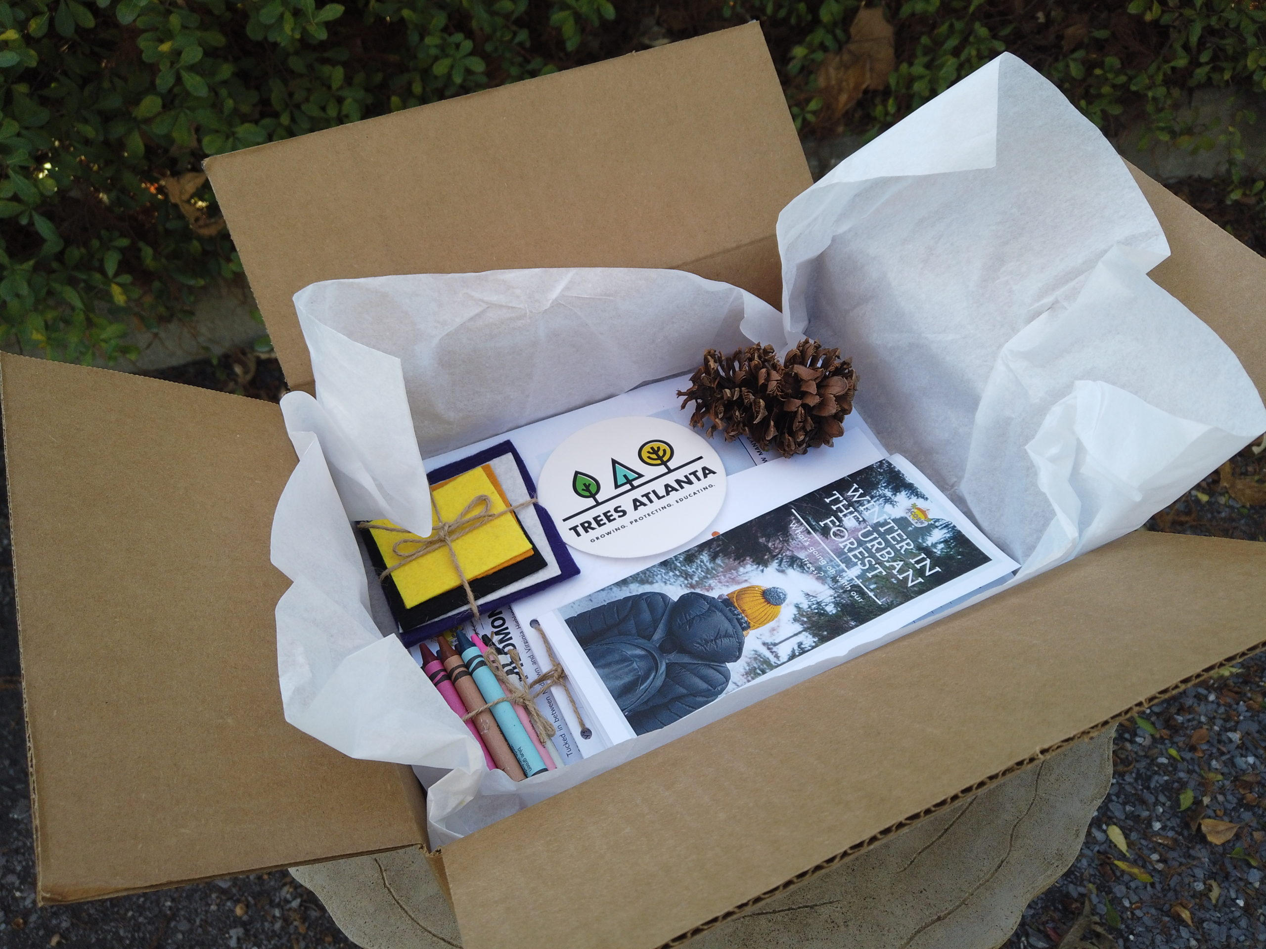 Acorn Club membership box