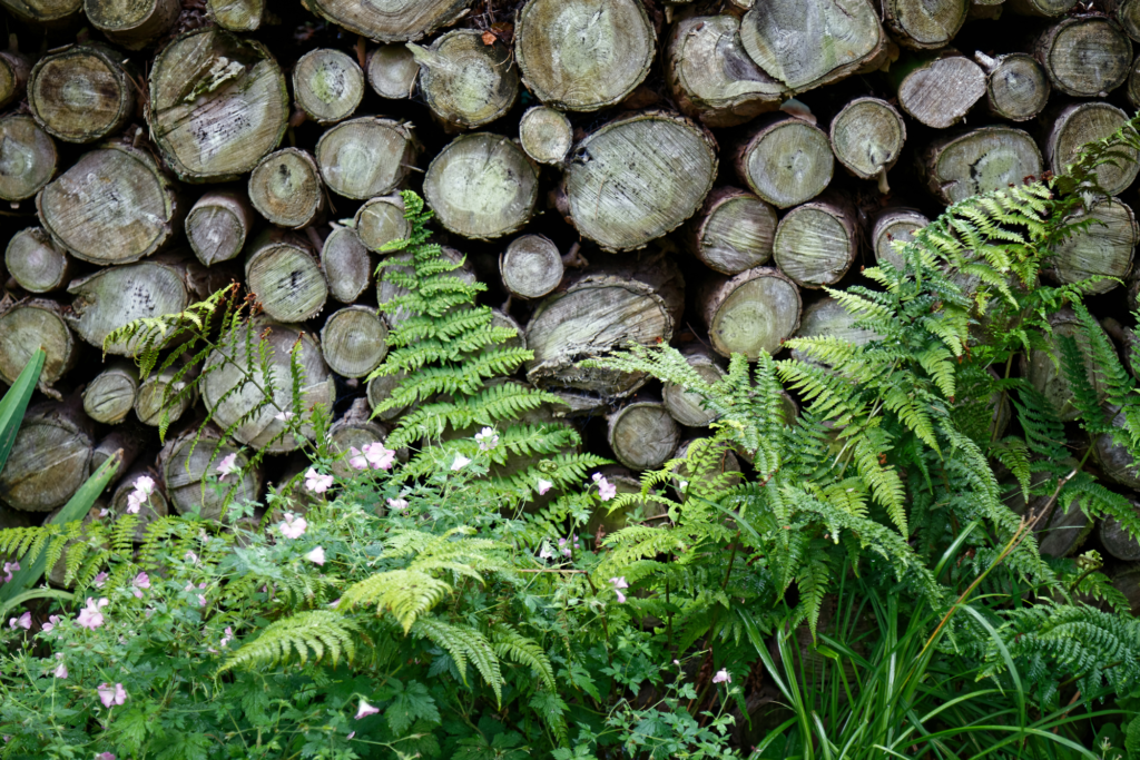 Stacked logs and ferns