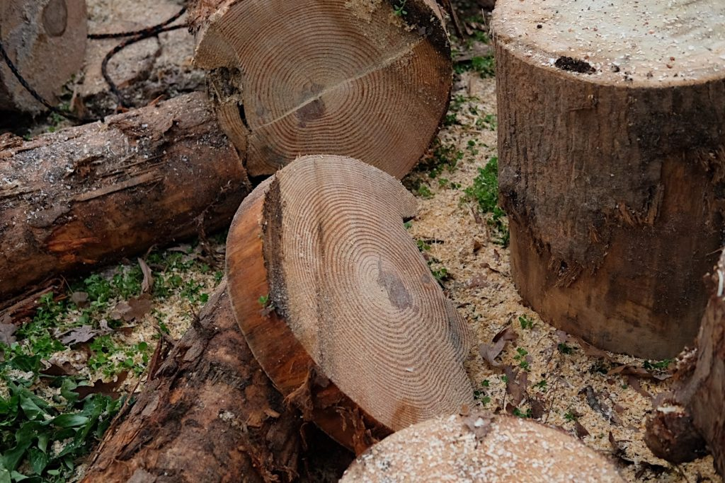 Sections of logs on the ground