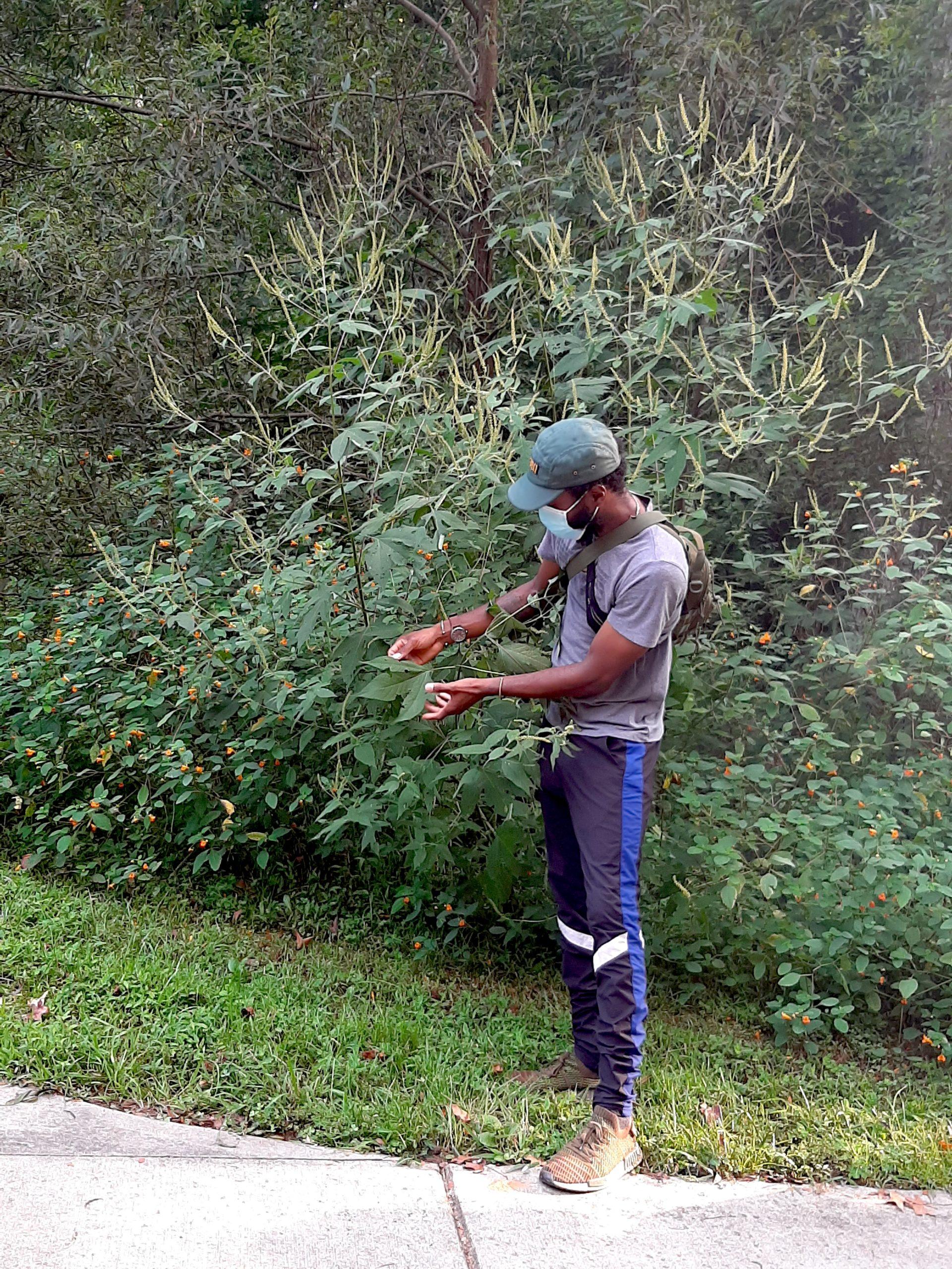 Jamal and ragweed