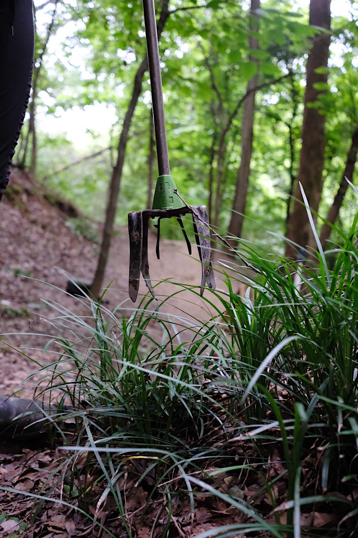 Digging up mondo grass