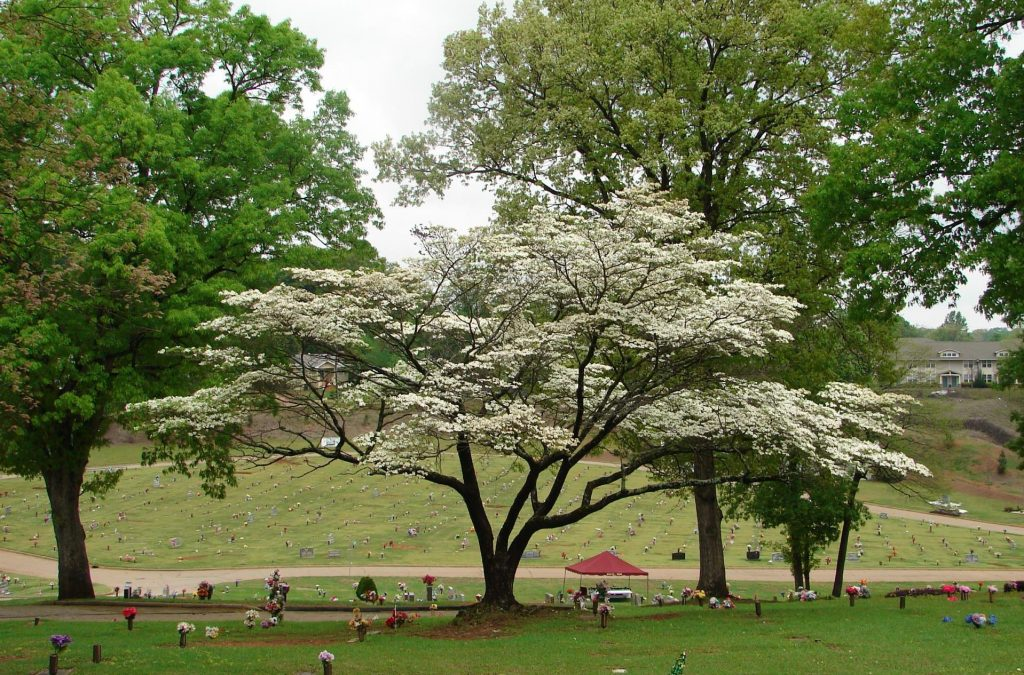Southview Cemetery trees