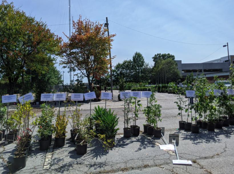 2020 Tree Sale at Kendeda Center