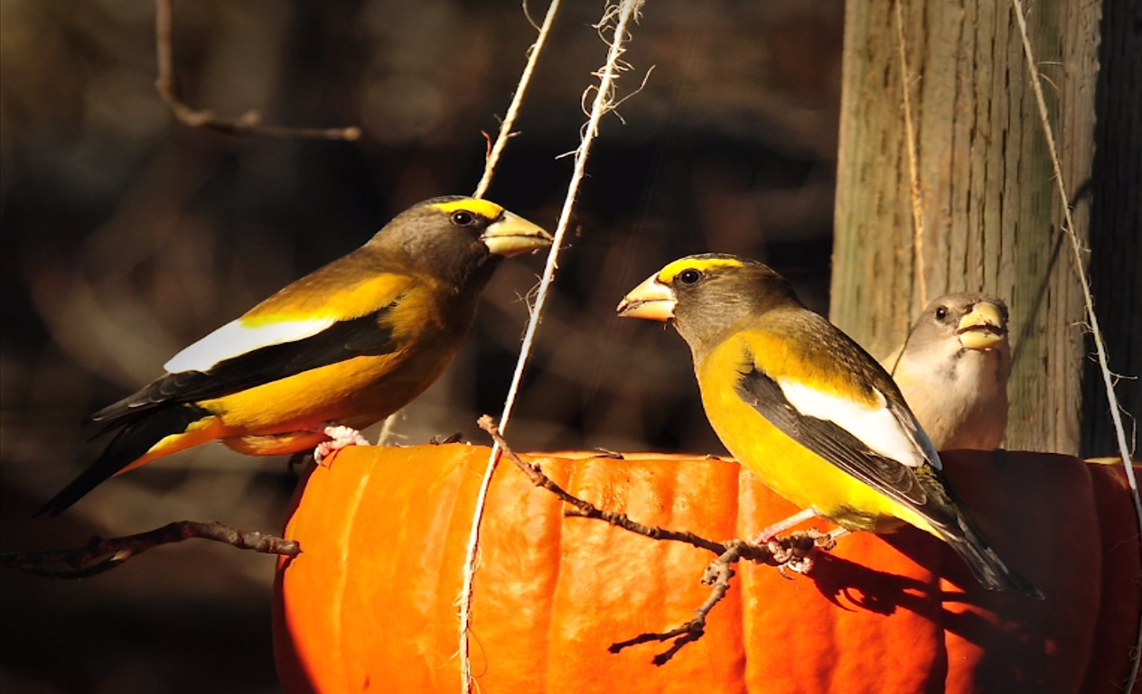Birds resting on bird feeder